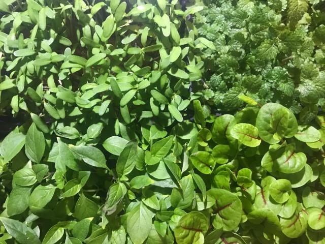Le Vaisseau Vert